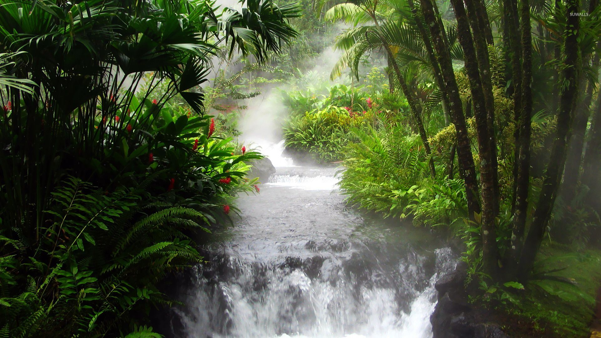 Rainforest Wallpaper Wallpaper Hd With Images