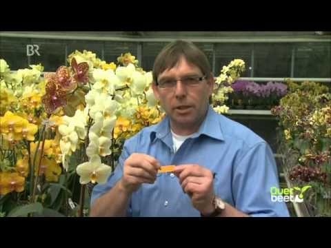querbeet orchideen selber z chten br youtube orchideen orchideen vermehren und