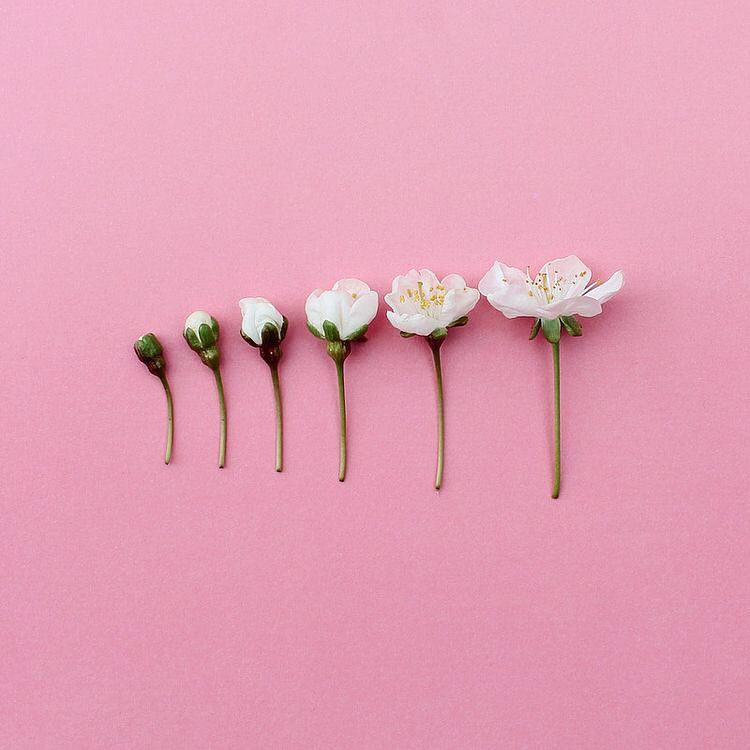 Growth Is A Beautiful Thing Pink Aesthetic Pastel Aesthetic Everything Pink
