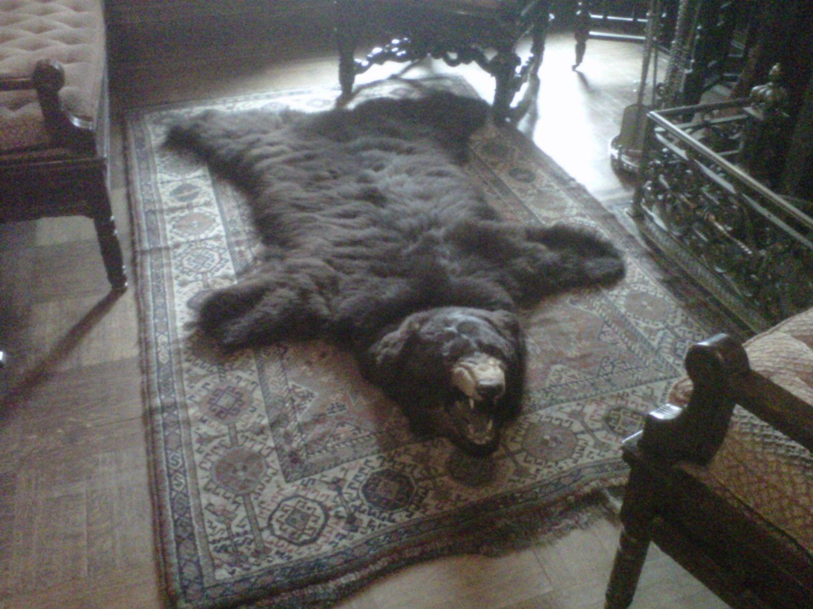 Bear skin rug on display in grand entrance area in front ...