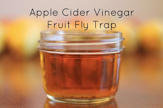 mleballard family tested apple cider vinegar fruit fly trap good to know pinterest. Black Bedroom Furniture Sets. Home Design Ideas