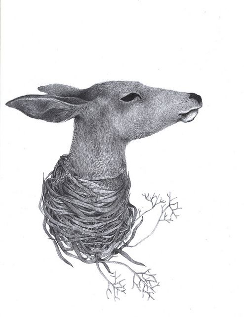 *deer*love*