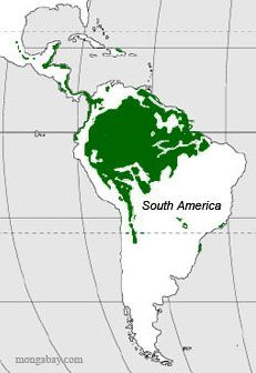 Map Of Rainforests In Central And South Amemerica With Images