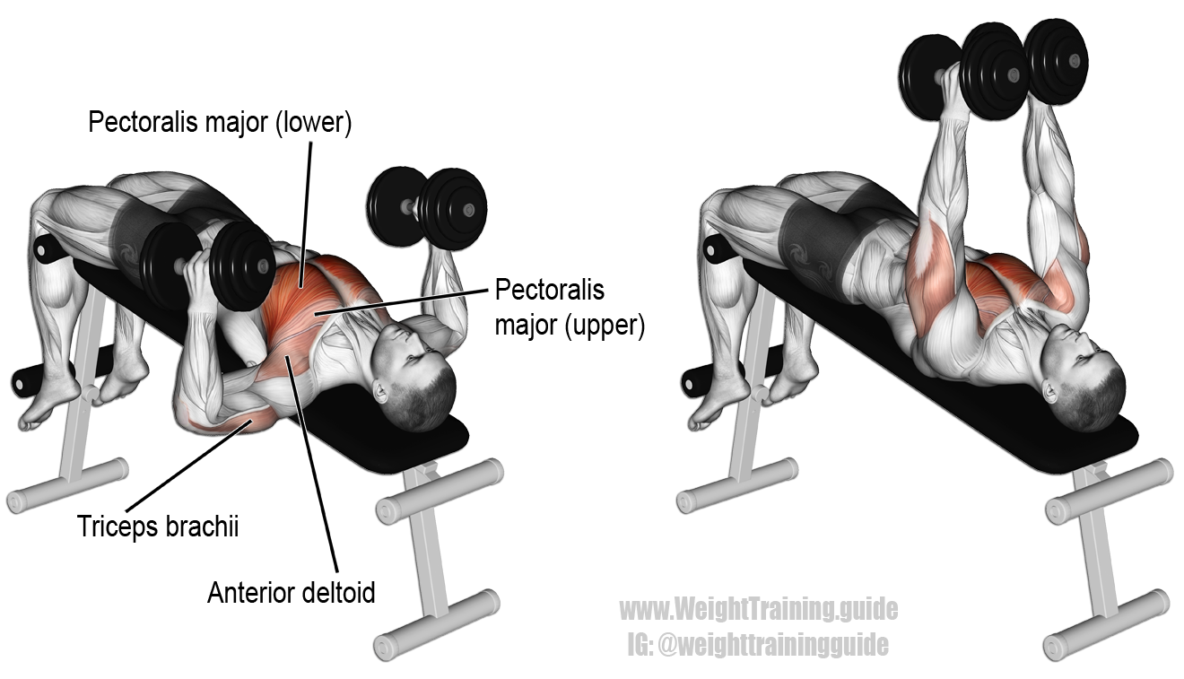 Decline Hammer Grip Dumbbell Bench Press A Compound Exercise Target Muscle Sternal Lower
