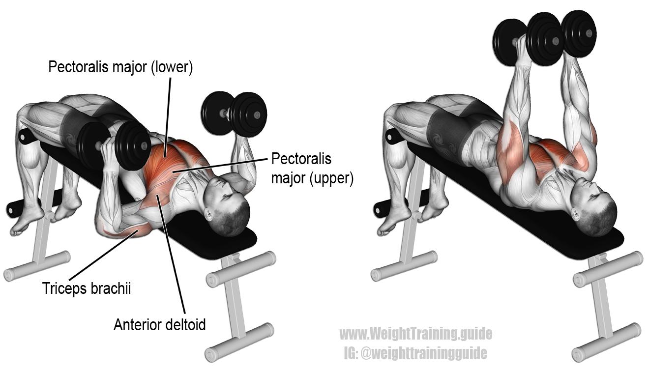 Decline Hammer Grip Dumbbell Bench Press Chest Exercises