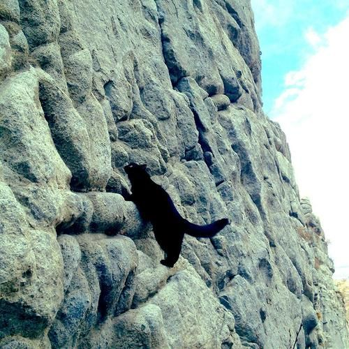 Rock climbing kitty