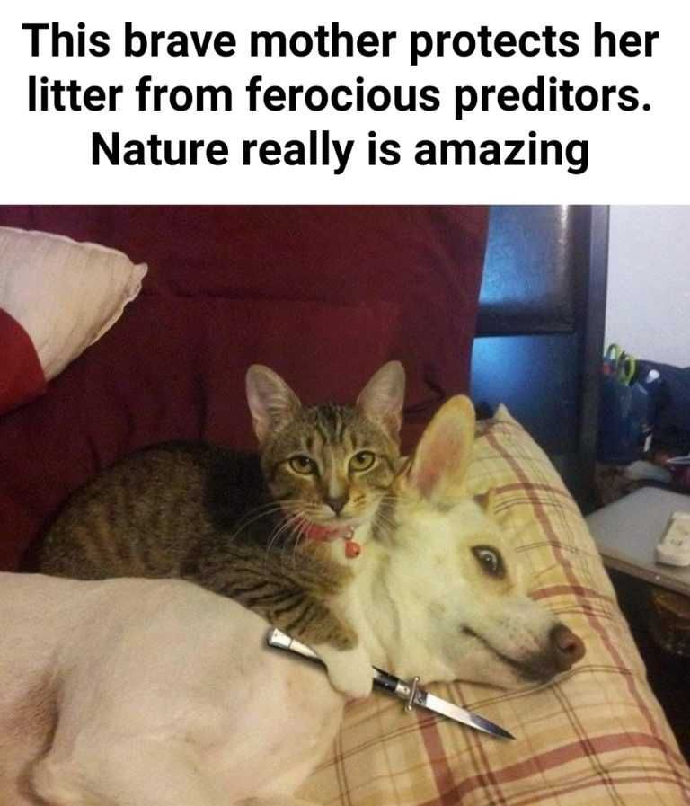 20 Cute, Funny And Adorable Animals For Getting You Out Of