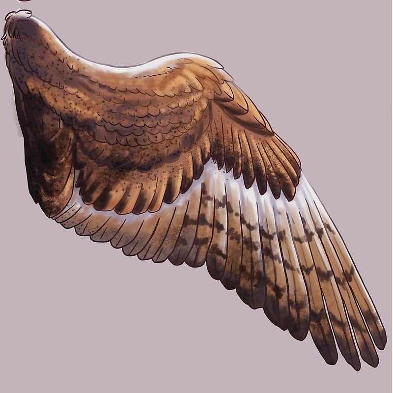 'Barn Owl Wing Scarf' Throw Pillow by JonseyJones