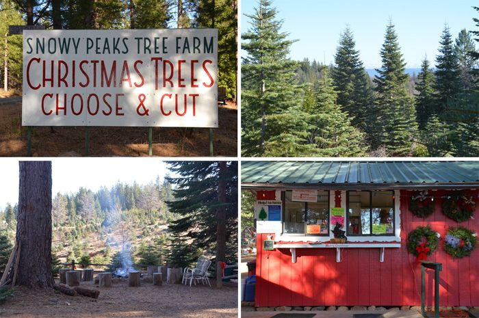 Snowy Peaks Tree Farm Tree Farms Christmas Tree Farm Tree