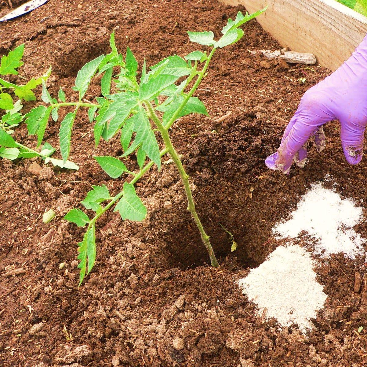 Epsom salt as fertilizer, pest deterrent, and seed starter. For ...