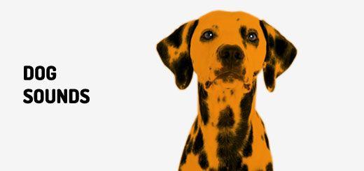 Dog Barking 4 Sound Clips From Orange Free Sounds Dog Sounds Dog Barking Dog Barking Noise
