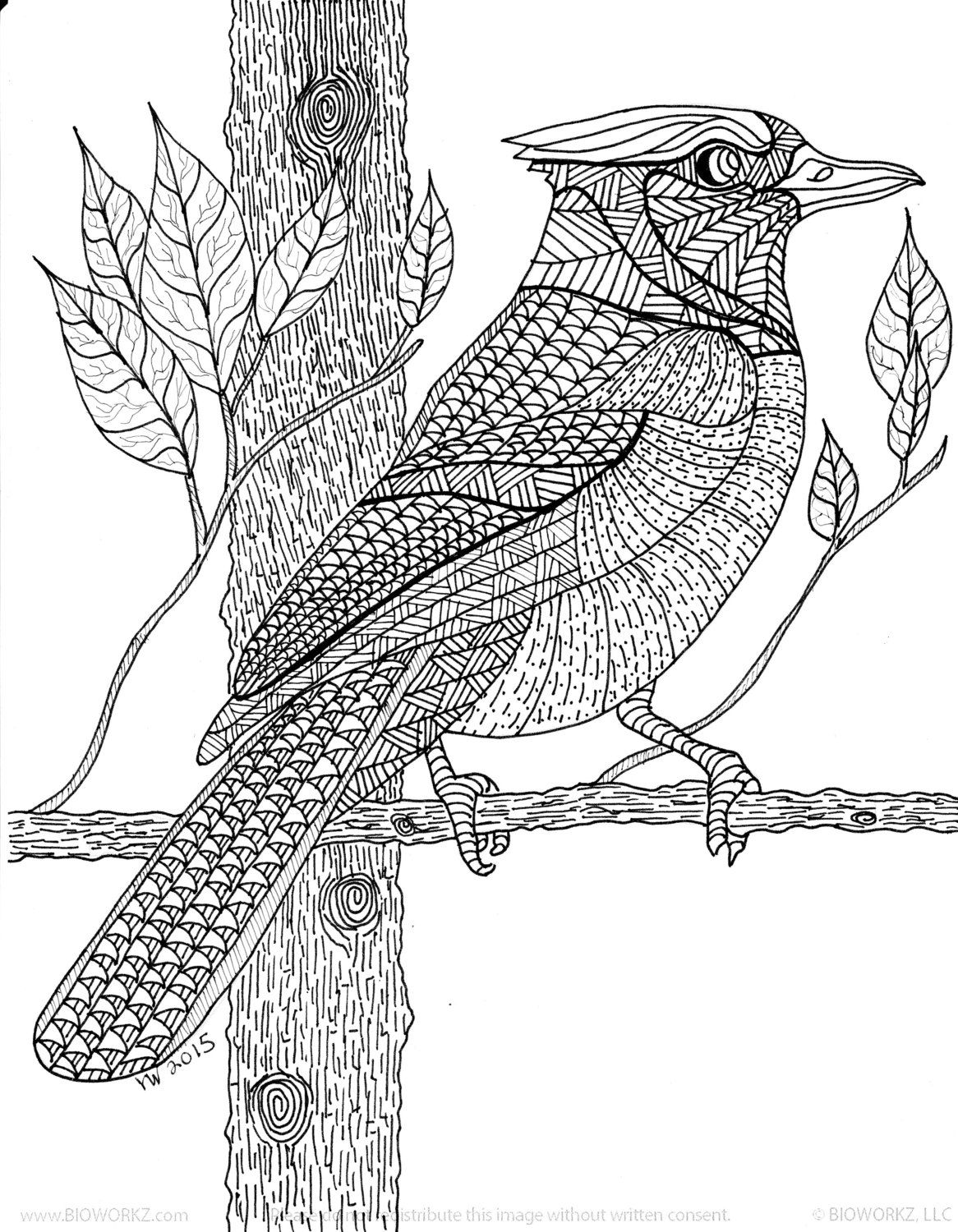 Blue Jay Zentangle Coloring Page Coloring Pages Mindfulness Colouring Color