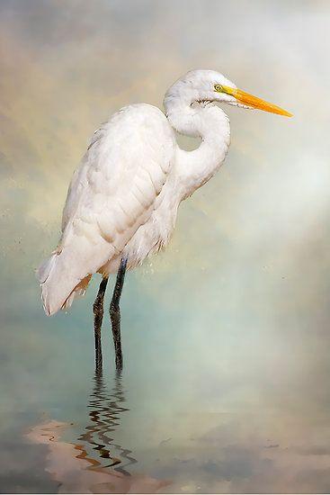 Egret Photography Tri-colored Heron Heron Print Egret Photo Egret Wall Art Heron Picture Egret Heron Photo Heron Photography