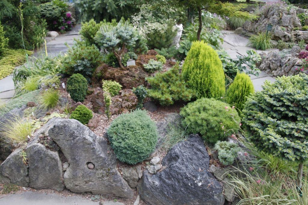 Conifers For Rock Gardens Garden Ftempo