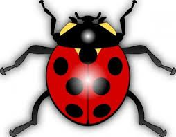 clipart insects and bugs - Google Search