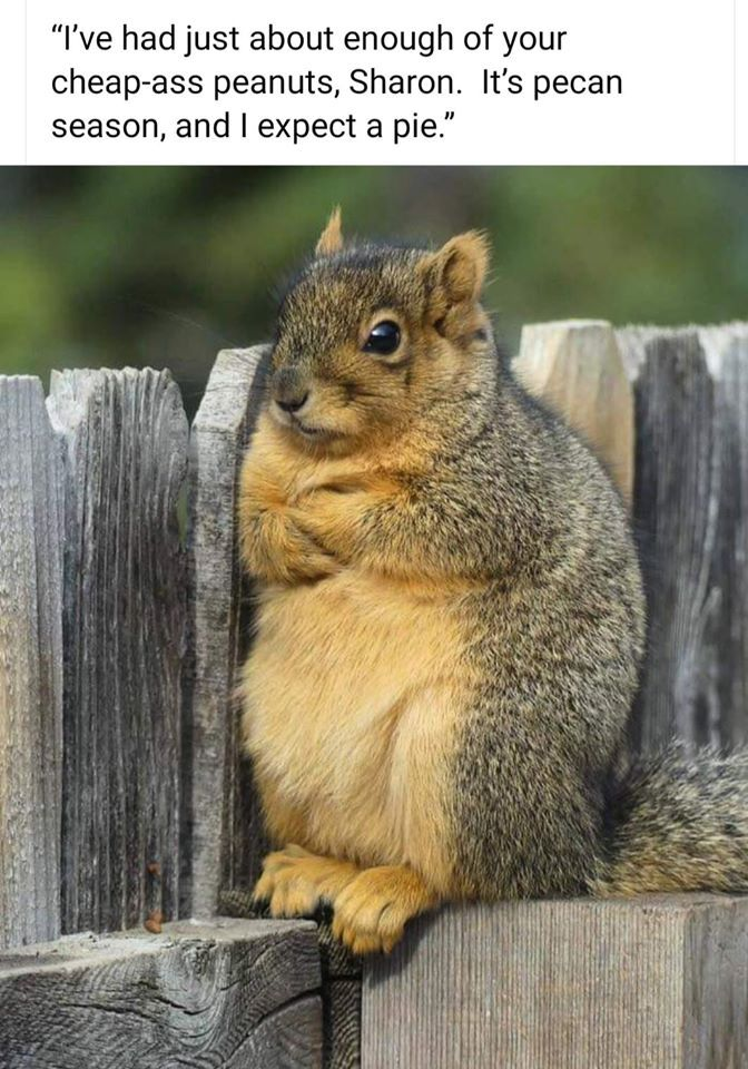 Pin by Sonja Hackett on Squirrels Animals, Funny animals