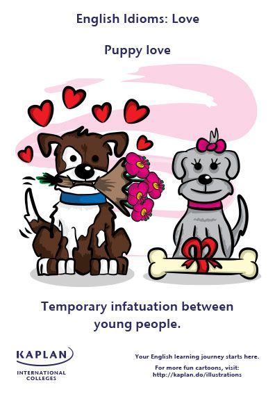 English Idioms Puppy Love For Example There Is A Little Puppy