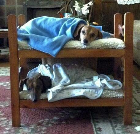 Cosy Zzzzz Sleeping Dogs Weenie Dogs