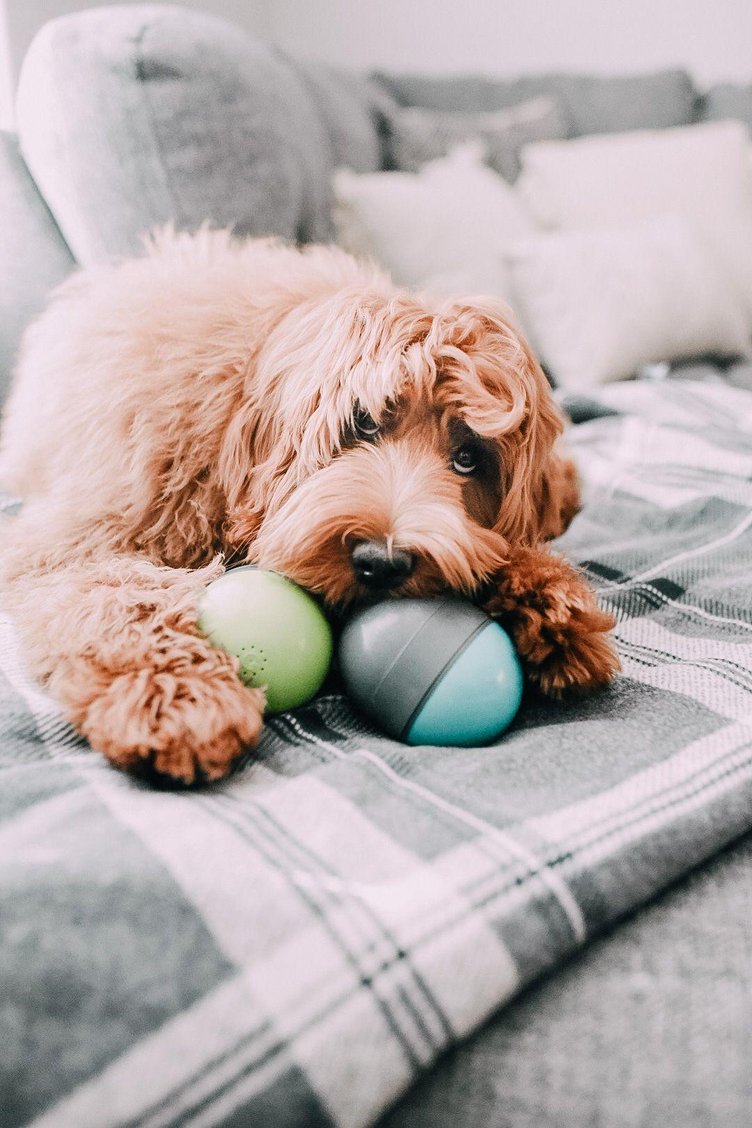 Ricochet Electronic Dog Toy Dogs, Dog toys, Electronic