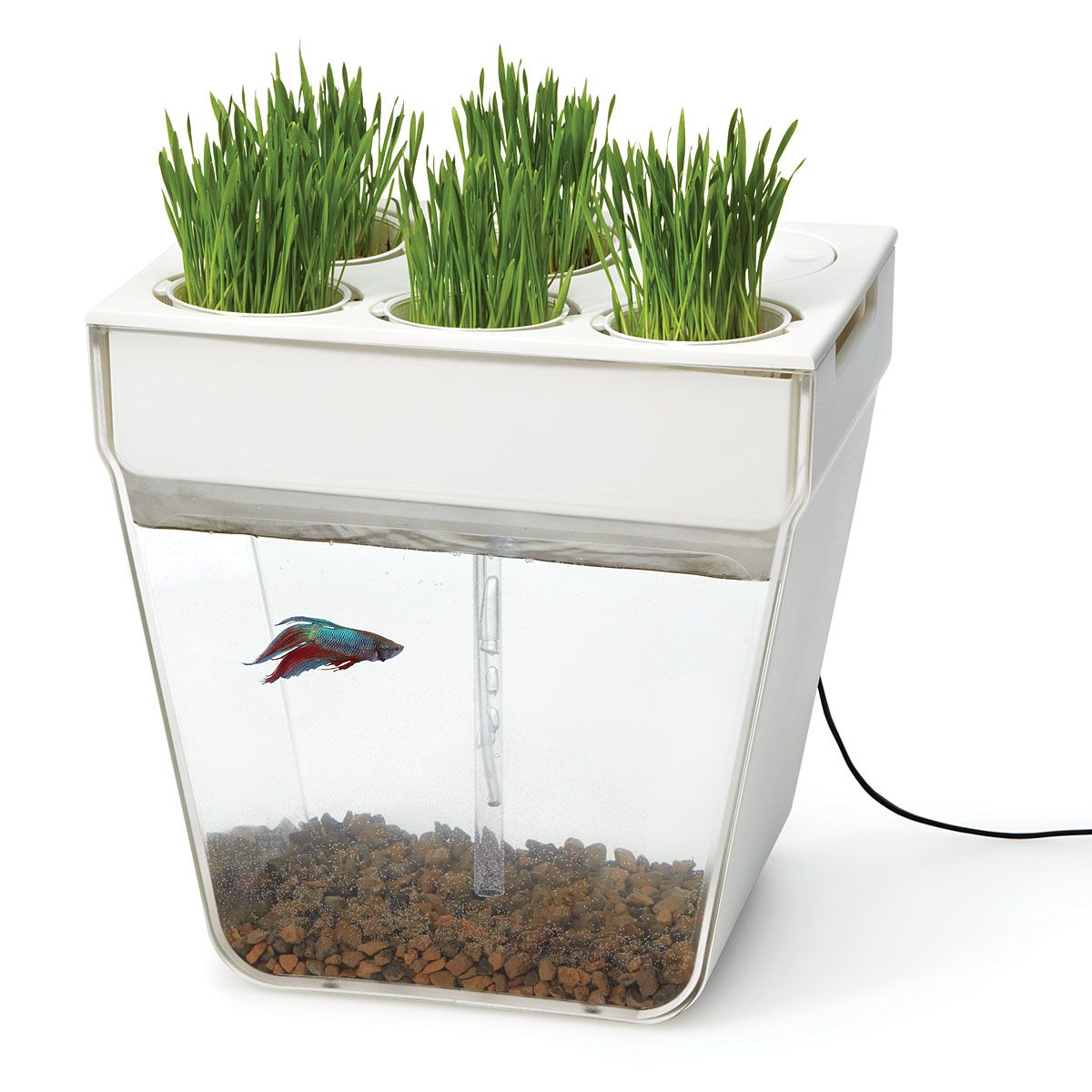 water garden | indoor herbs, goldfish and fishbowl
