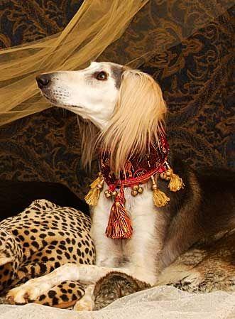 Martingale Collars, Velvet Leashes, Dog Collars - Posh Pawz