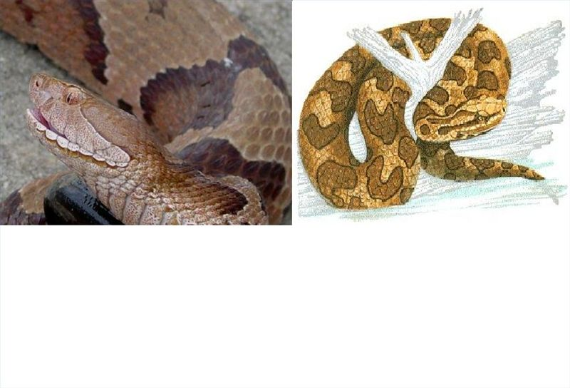 940d98de7917134046da8f39e55d09e4 - How To Get Rid Of Copperhead Snakes In Your Yard