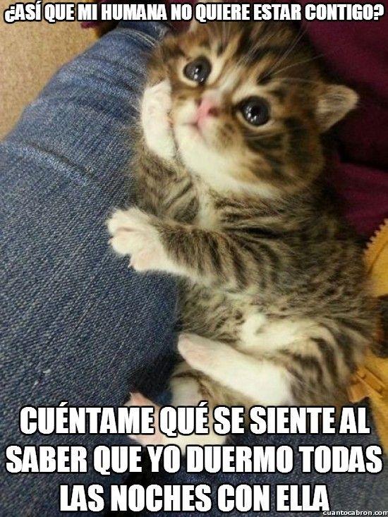 Gatitos Y Perritos Graciosos Con Frases Buscar Con Google Funny Cat Memes Animals Funny Cats Kitten Pictures