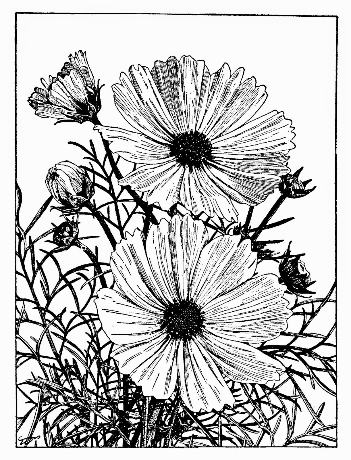 Happy New Year Everyone! Flower crown drawing, Poppy