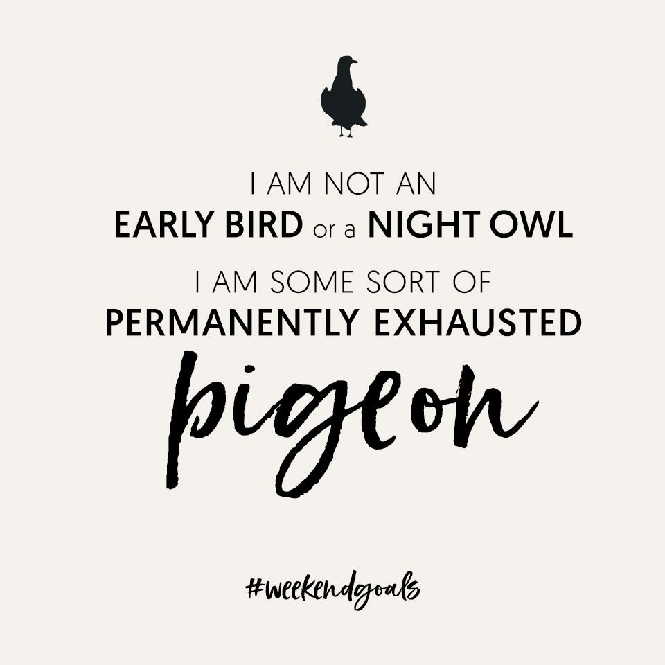 Friday Funny I Am Not An Early Bird Or A Night Owl I Am Some Sort Of Permanently Exhausted Pigeon Theloungeco Funny Bird Quotes Funny Quotes Friday Humor