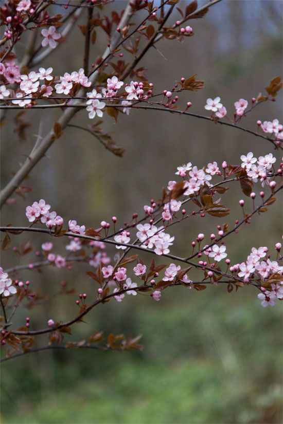 Just 5 More Minutes With Our Airstream Non Stop Outdoor Adventures Along With Epicurean Cuisi Cherry Blossom Wallpaper Beautiful Flowers Sakura Cherry Blossom