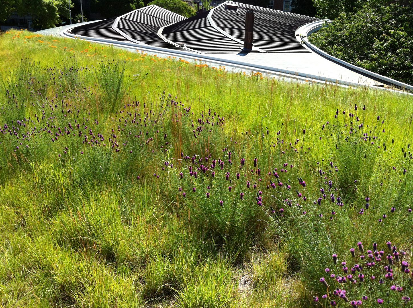 Image Result For Butterfly Garden Green Roof. Photo WallpaperRooftopGreen  RoofsBrooklynButterflyNyc