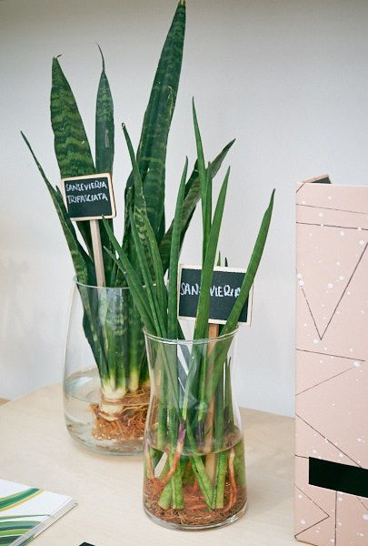 5 Plants For The Home Office The Houseplant Urban Jungle Blog Plants Grown In Water Plant Decor House Plants