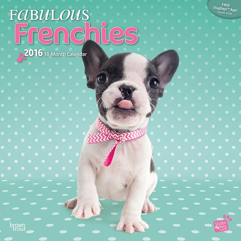 Fabulous Frenchies 2016 Wall Calendar Franzosische Bulldogge