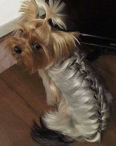 Someone Has Too Much Spare Time Yorkie Welpen Yorkshire Hund Hundehaarschnitte