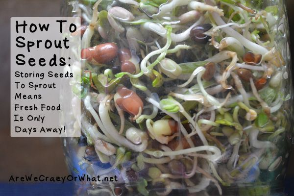 How To Sprout Seeds Storing Seeds To Sprout Means Fresh Food Is Only Days Away Self Reliant School Fresh Food Food Raw Food Recipes