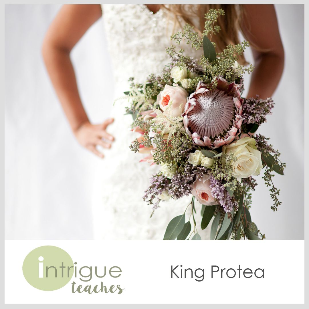 King Protea Bouquet Intrigueteaches Https Www Intrigueteaches Com Bridesmaid Flower Bouquet Bridal Bouquet Cost Protea Bouquet
