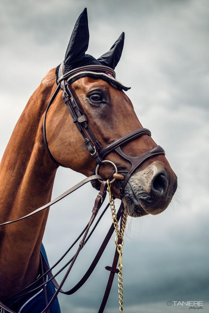 Gct Longines Chantilly 2015 Christophe Taniere Blog Fond Ecran Cheval Dressage Cheval Photographie Equestre