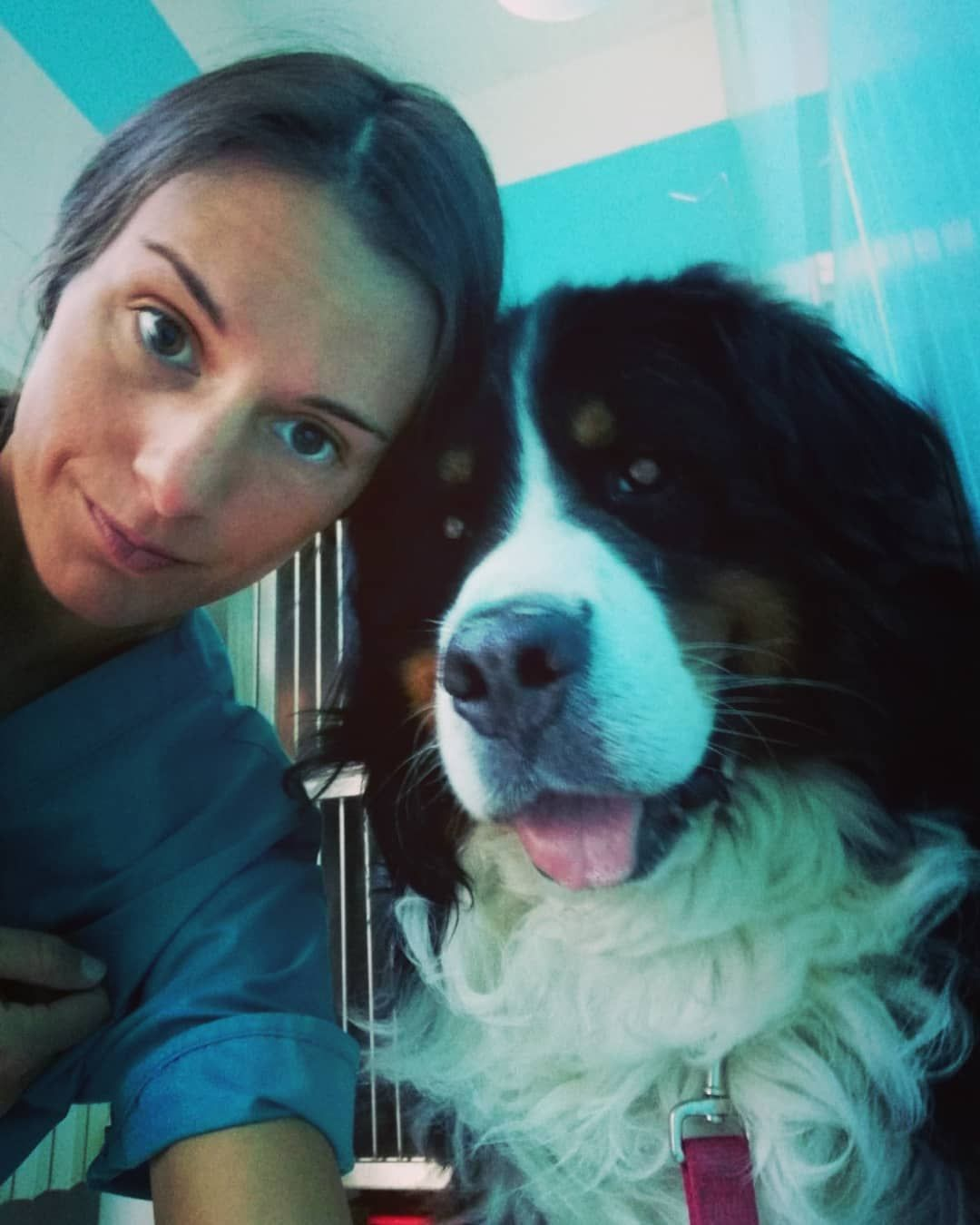 Symptoms And Treating Food Allergies In Dogs Oh My Dog