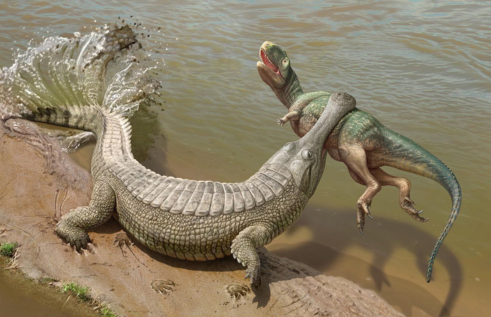Paleontological Reconstruction Of Sarcosuchus Imperator