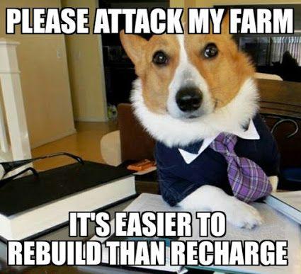Peacock Funny Farm Animals Funny Dog Memes Dog Memes Funny Dogs
