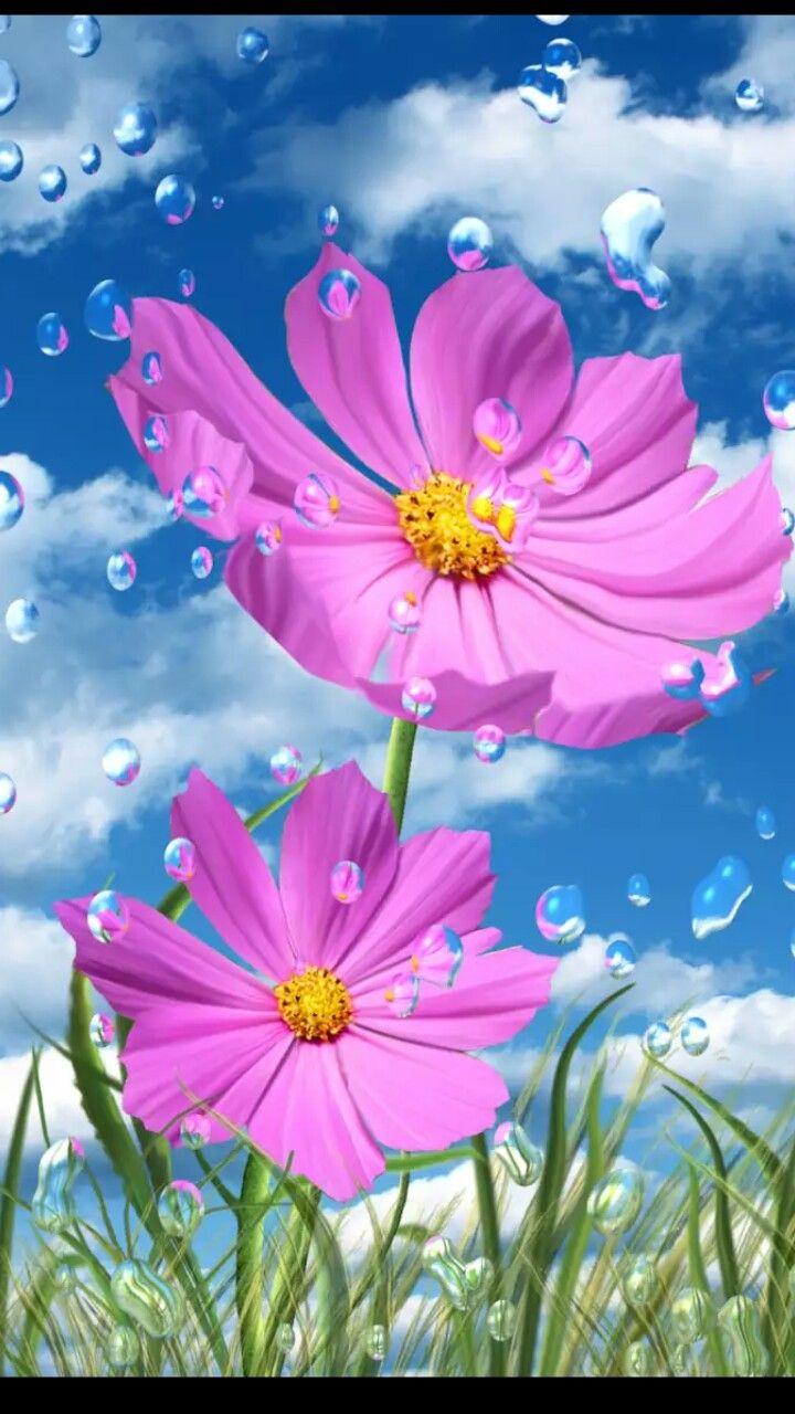 pinjamie mair on wallpapers | pinterest | flowers, wallpaper and