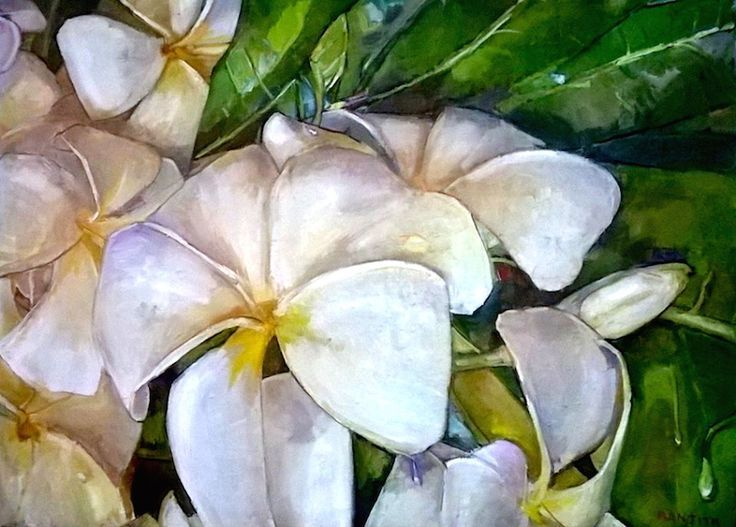 White Frangipani By Ranjith Perera A Sri Lankan Artist Who