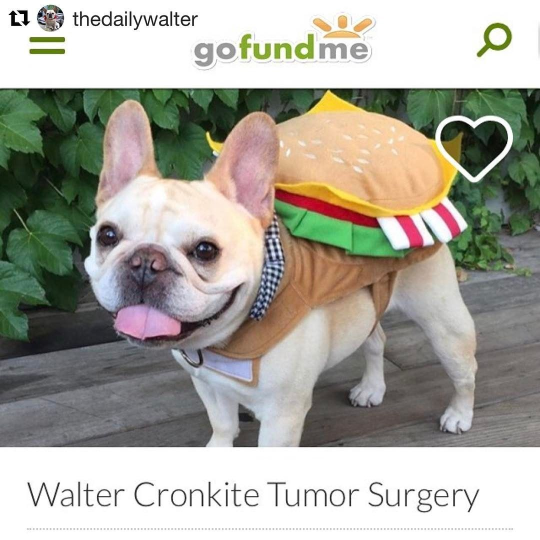 Hi friends! One of my best buds, thedailywalter, has been
