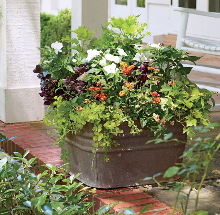 Bepflanzte Blumenkübel blumenkübel bepflanzen sommer zinnwanne wandelröschen fleißiges