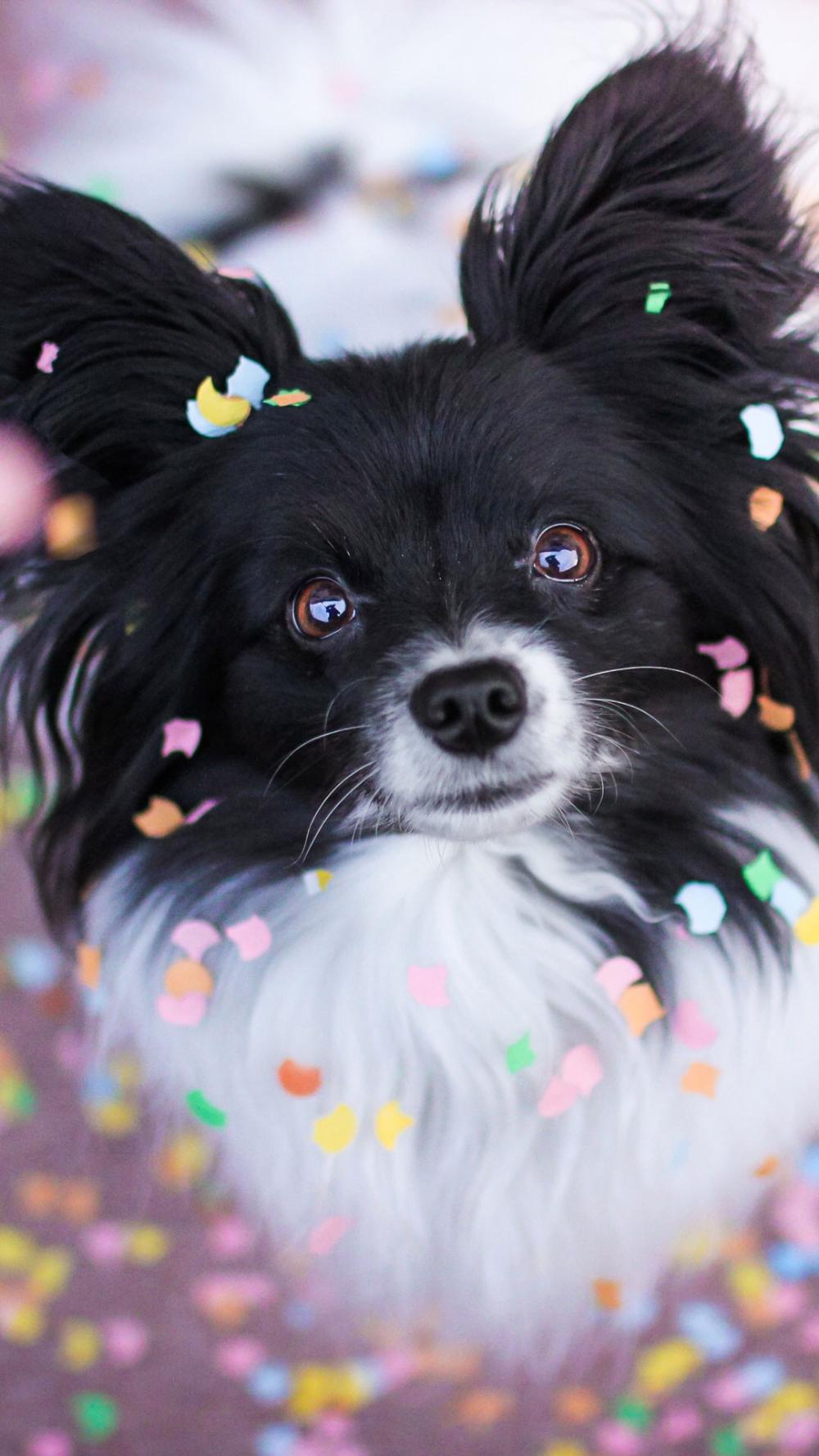 Loyal Cute Pet Dog Mobile Wallpaper Dog Cute Animals Loyalty