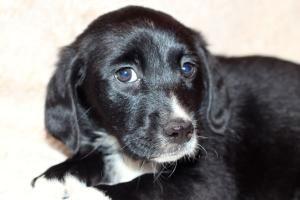 Adopt Raleigh On Labrador Retriever Dog Labrador Retriever Retriever Dog