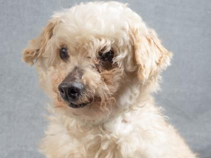 Adopt Loxley A Lovely 10 Years Dog Available For Adoption At