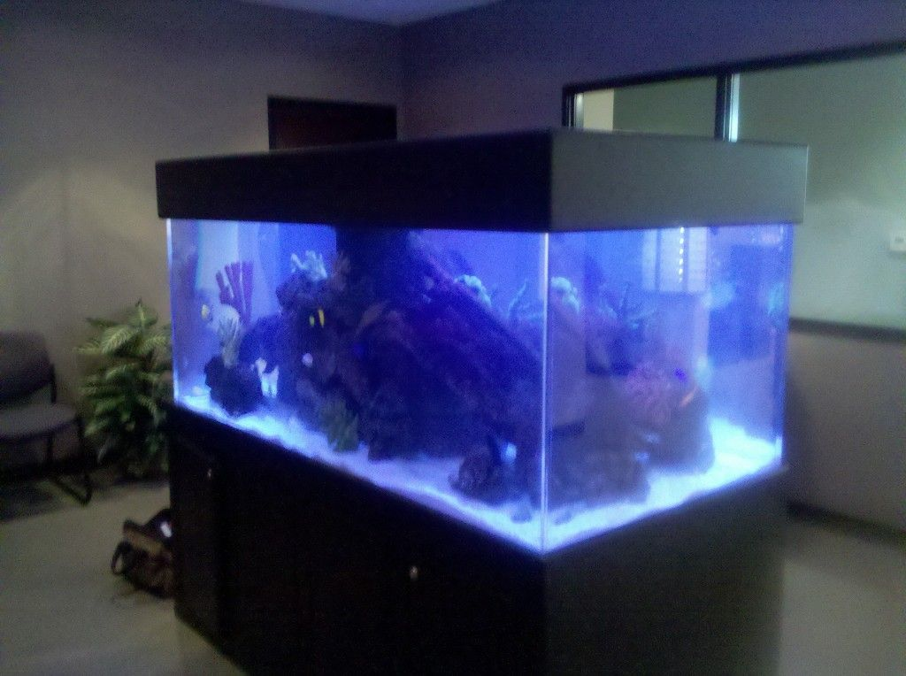 400 gallon saltwater aquarium maintained by sunset