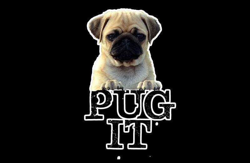 Pug It Cute Dog