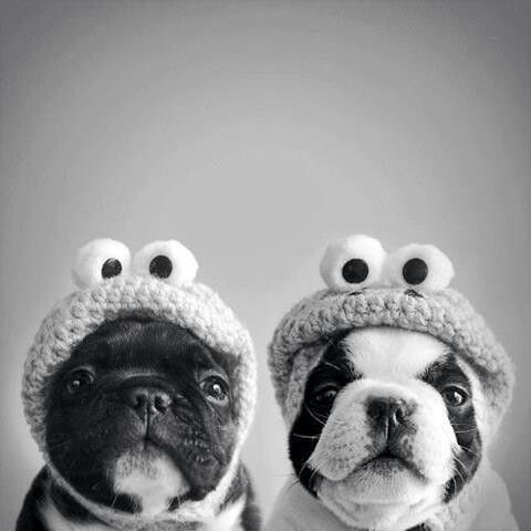 Froggy doggys